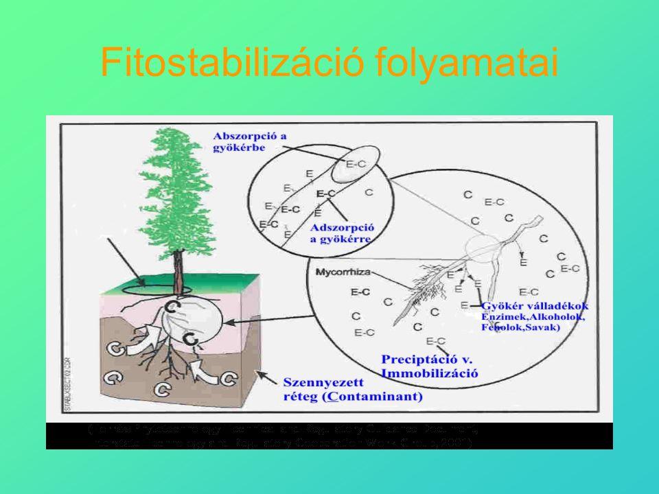 Fitostabilizáció folyamatai