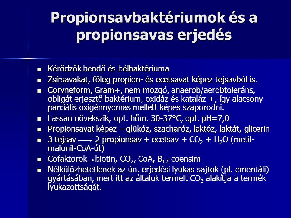 Propionsavbaktériumok és a propionsavas erjedés