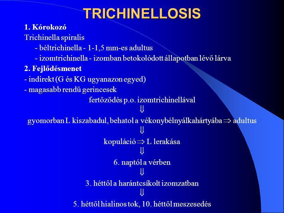TRICHINELLOSIS 1. Kórokozó Trichinella spiralis