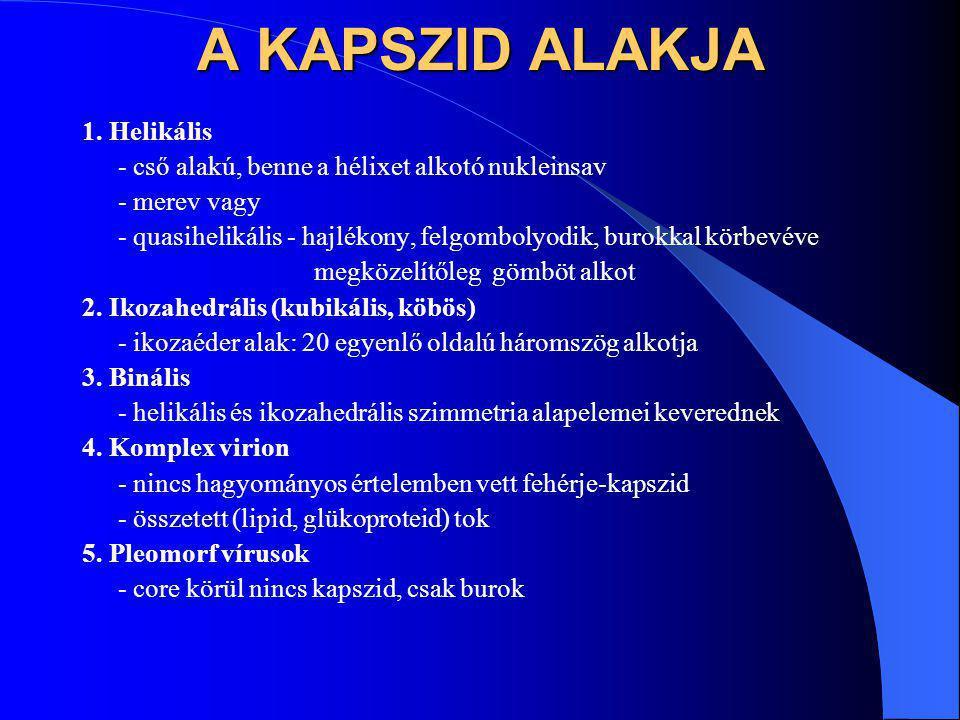 A KAPSZID ALAKJA 1. Helikális