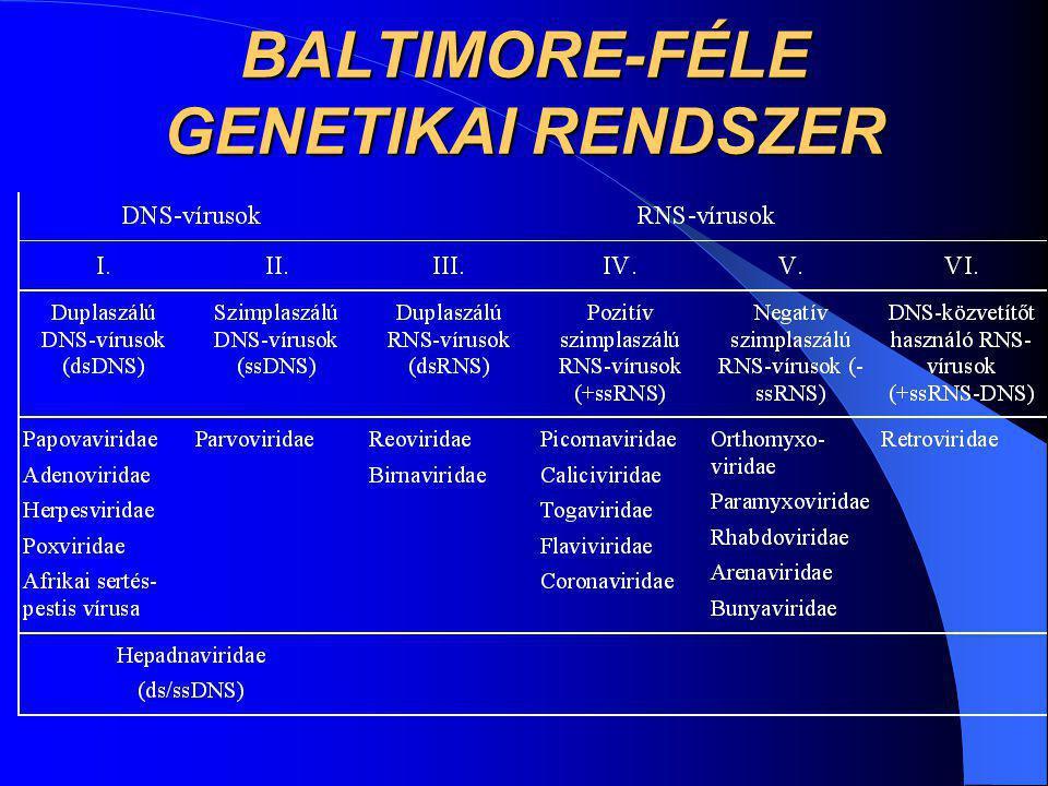 BALTIMORE-FÉLE GENETIKAI RENDSZER