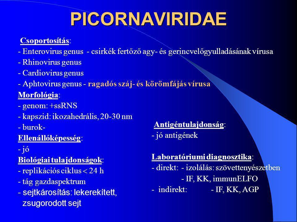 PICORNAVIRIDAE Csoportosítás: