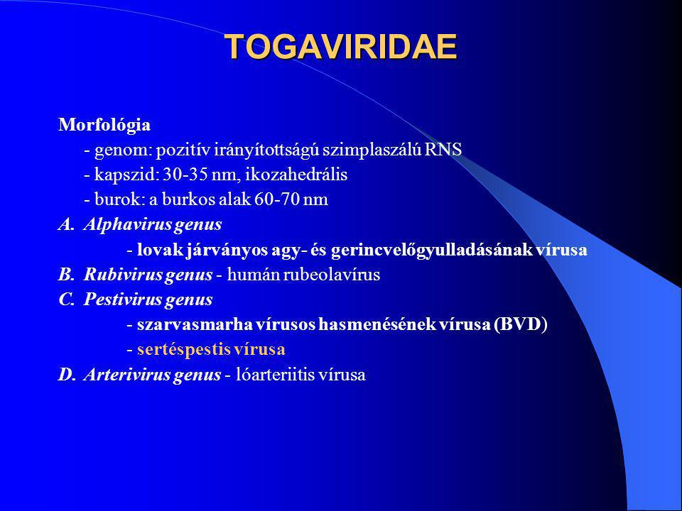 TOGAVIRIDAE Morfológia