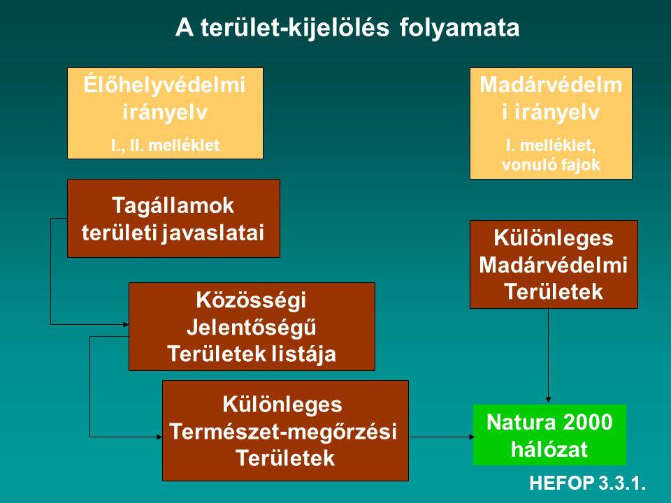 A terület-kijelölés folyamata