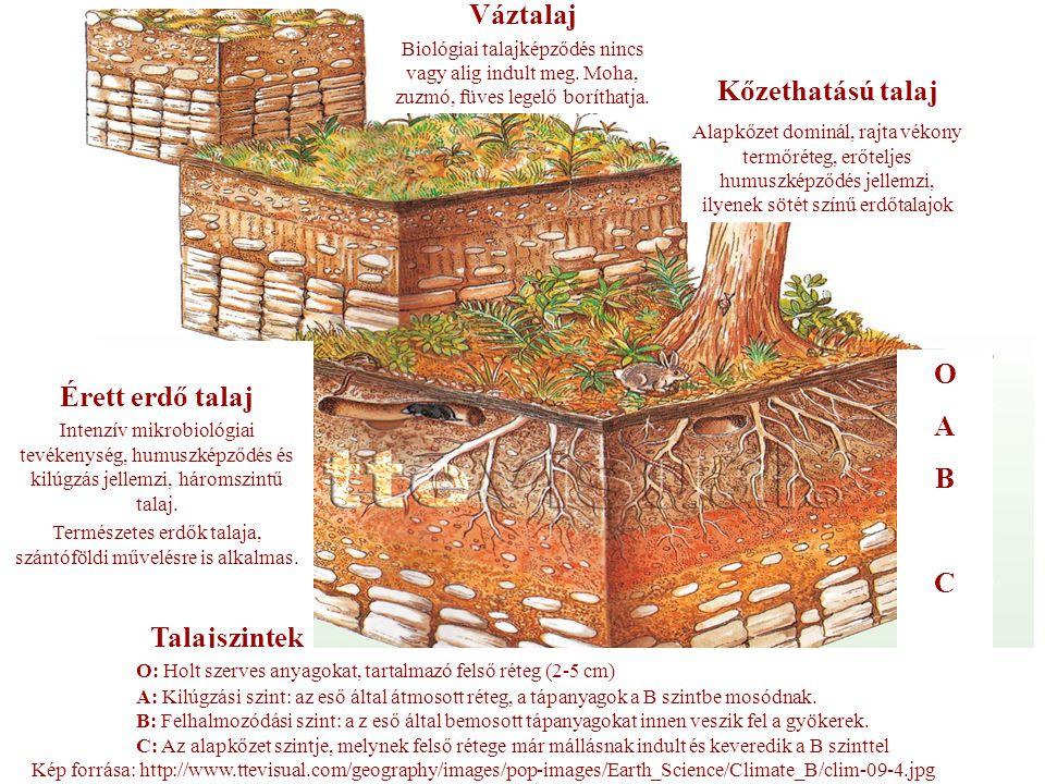 Természetes erdők talaja, szántóföldi művelésre is alkalmas.