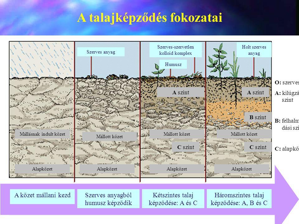 A talajképződés fokozatai
