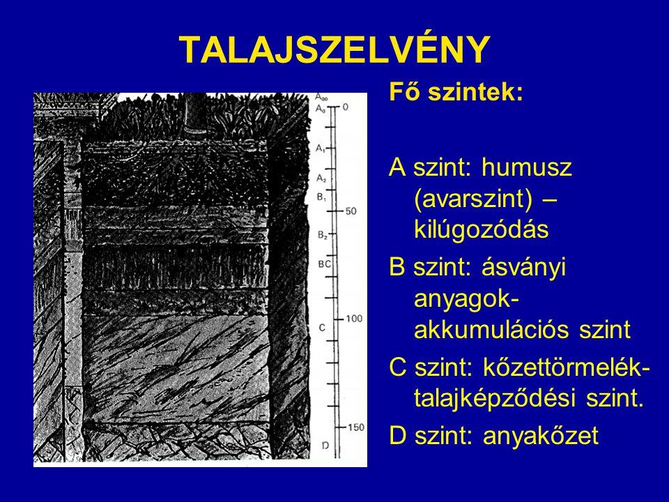 TALAJSZELVÉNY Fő szintek: A szint: humusz (avarszint) –kilúgozódás