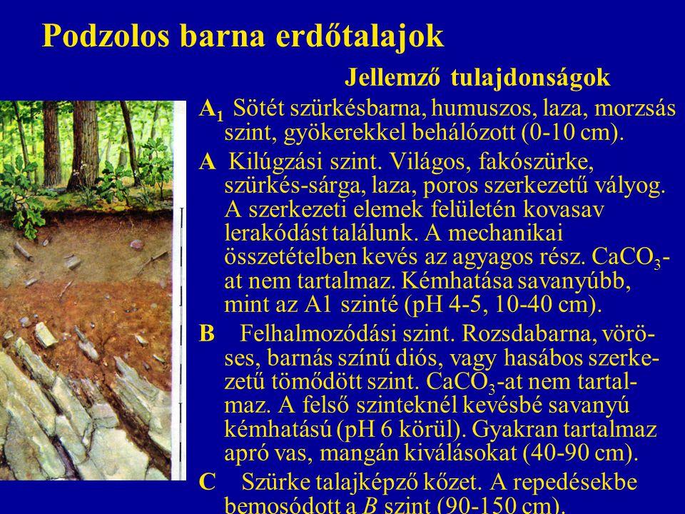 Podzolos barna erdőtalajok