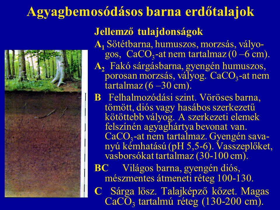 Agyagbemosódásos barna erdőtalajok