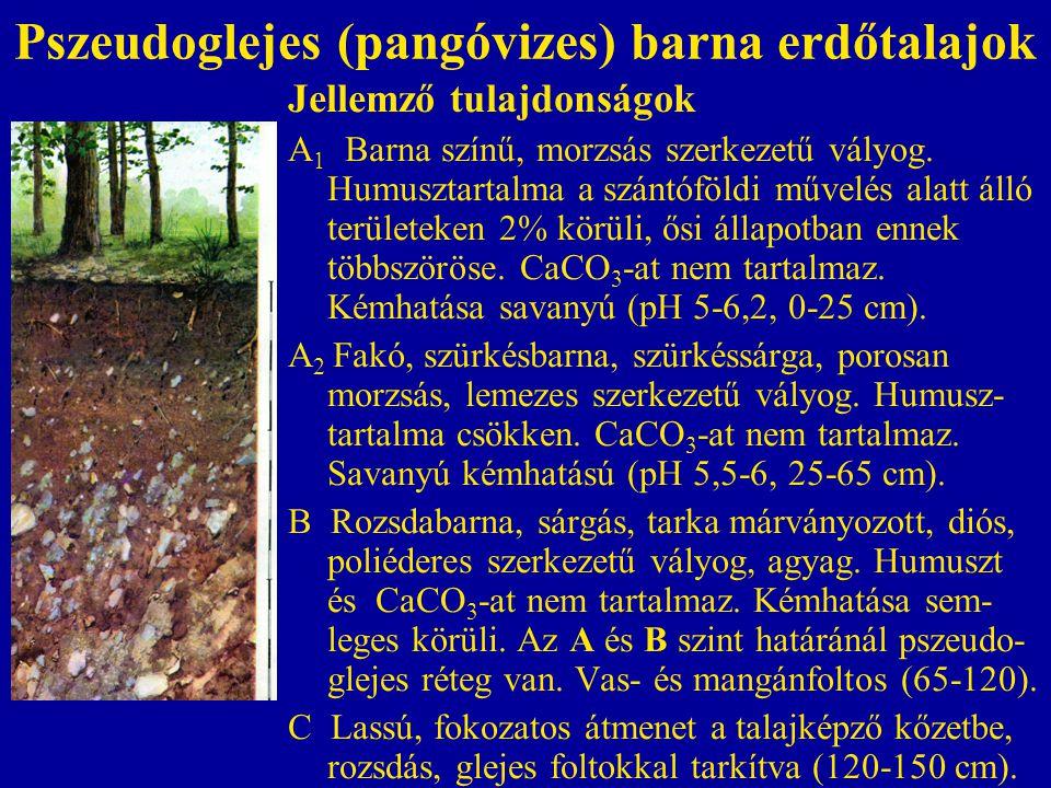Pszeudoglejes (pangóvizes) barna erdőtalajok