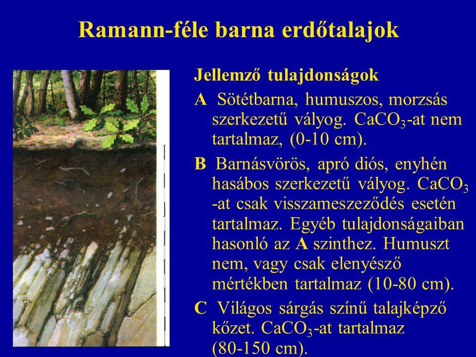 Ramann-féle barna erdőtalajok