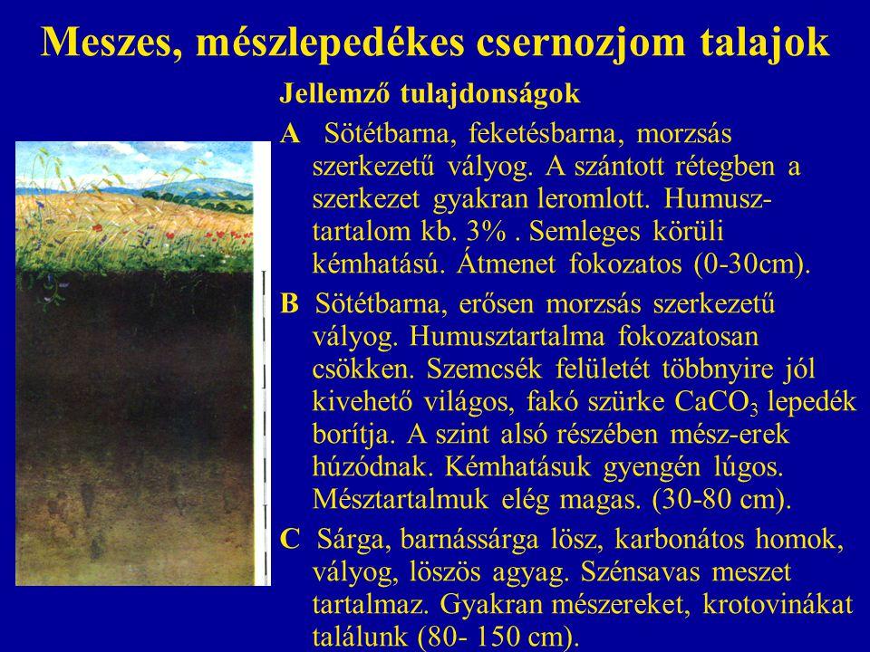 Meszes, mészlepedékes csernozjom talajok