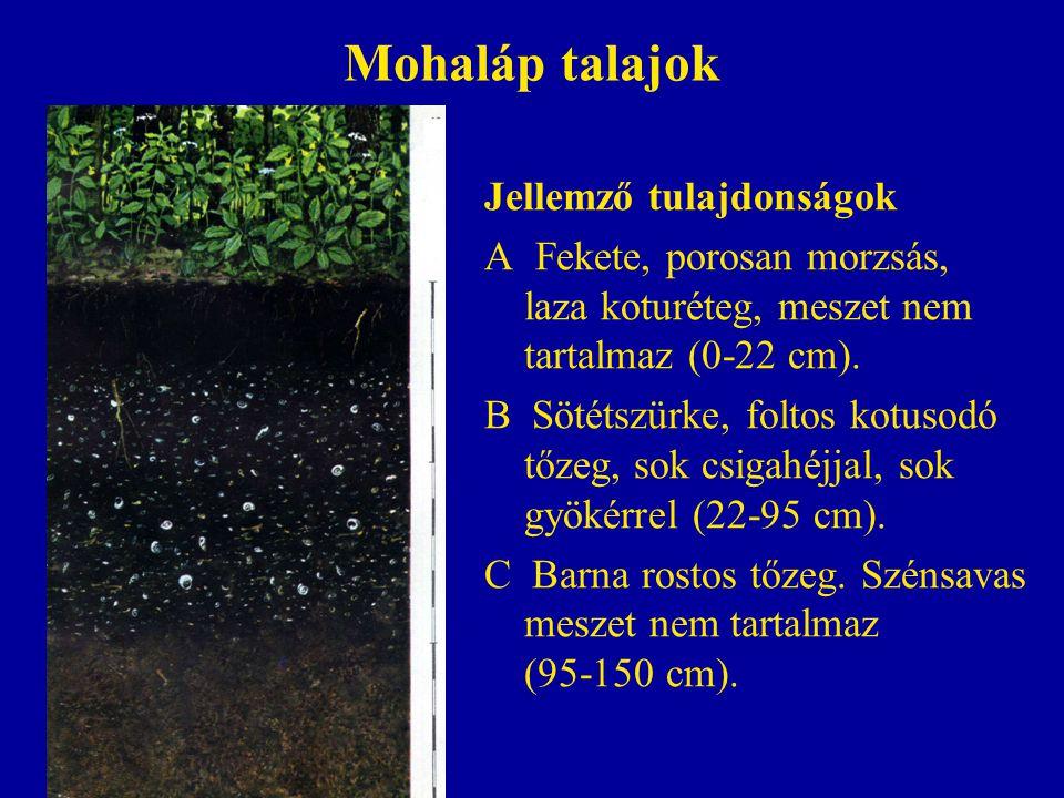 Mohaláp talajok Jellemző tulajdonságok