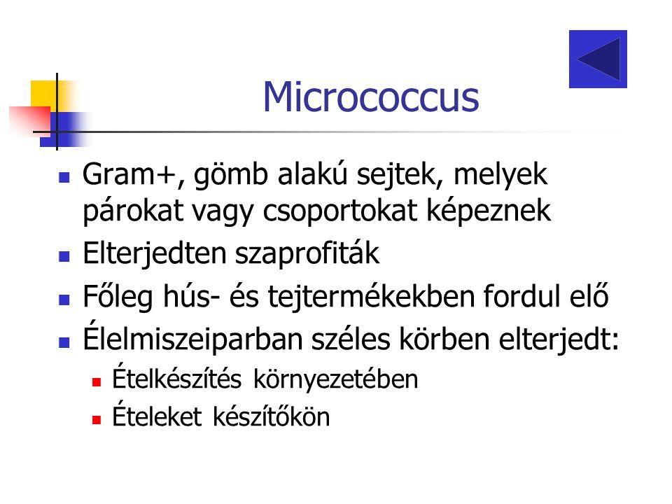 Micrococcus Gram+, gömb alakú sejtek, melyek párokat vagy csoportokat képeznek. Elterjedten szaprofiták.