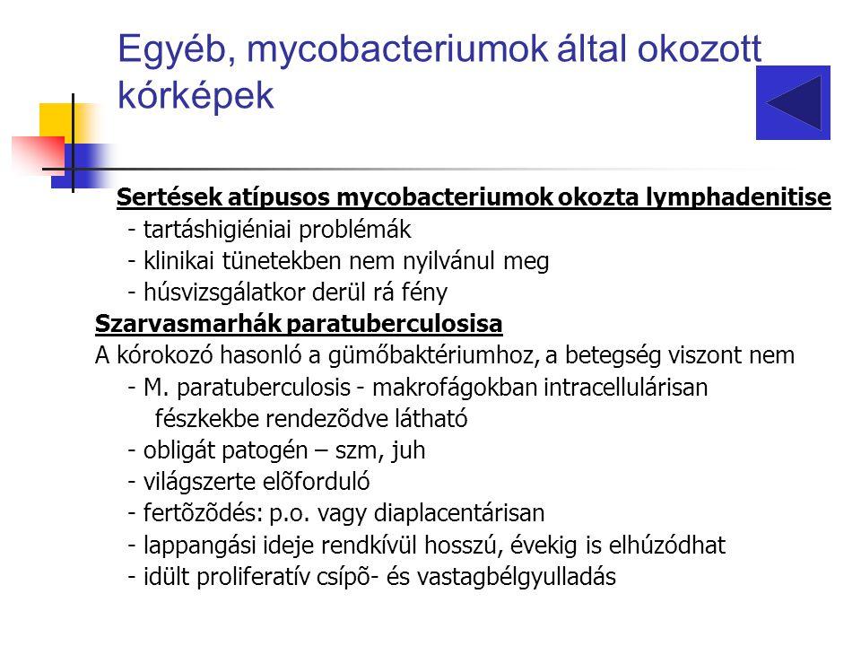Egyéb, mycobacteriumok által okozott kórképek