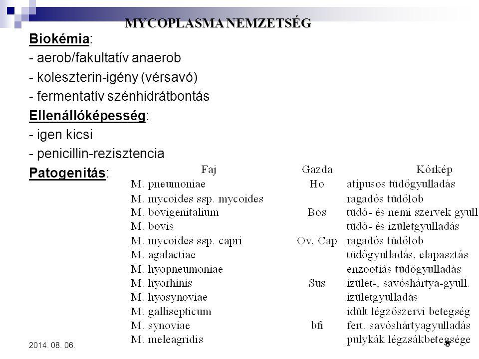 - aerob/fakultatív anaerob - koleszterin-igény (vérsavó)