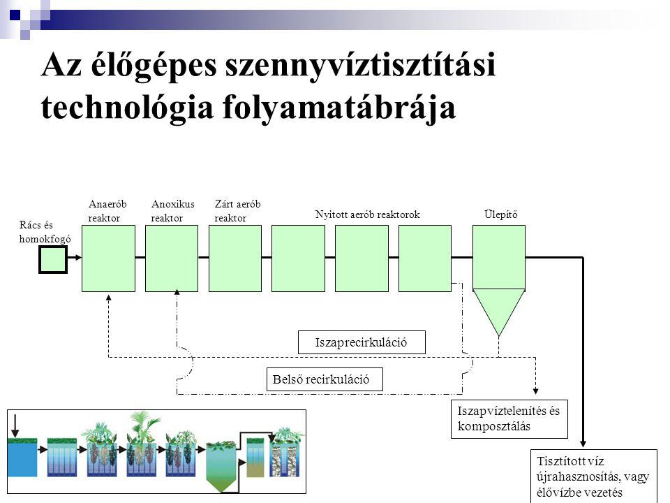 Az élőgépes szennyvíztisztítási technológia folyamatábrája
