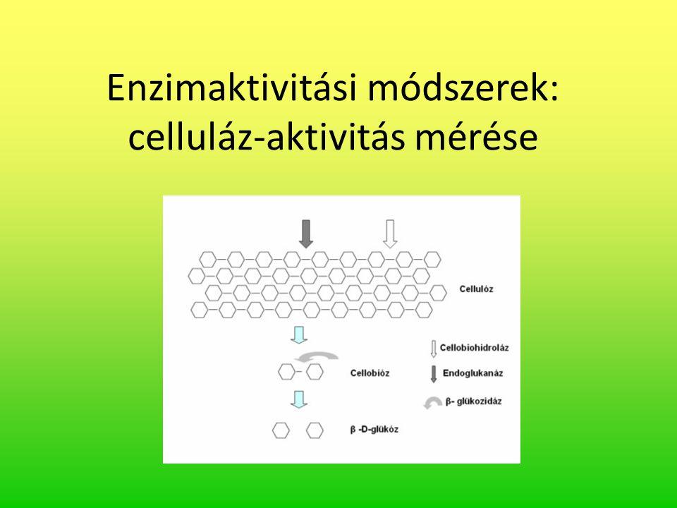 Enzimaktivitási módszerek: celluláz-aktivitás mérése