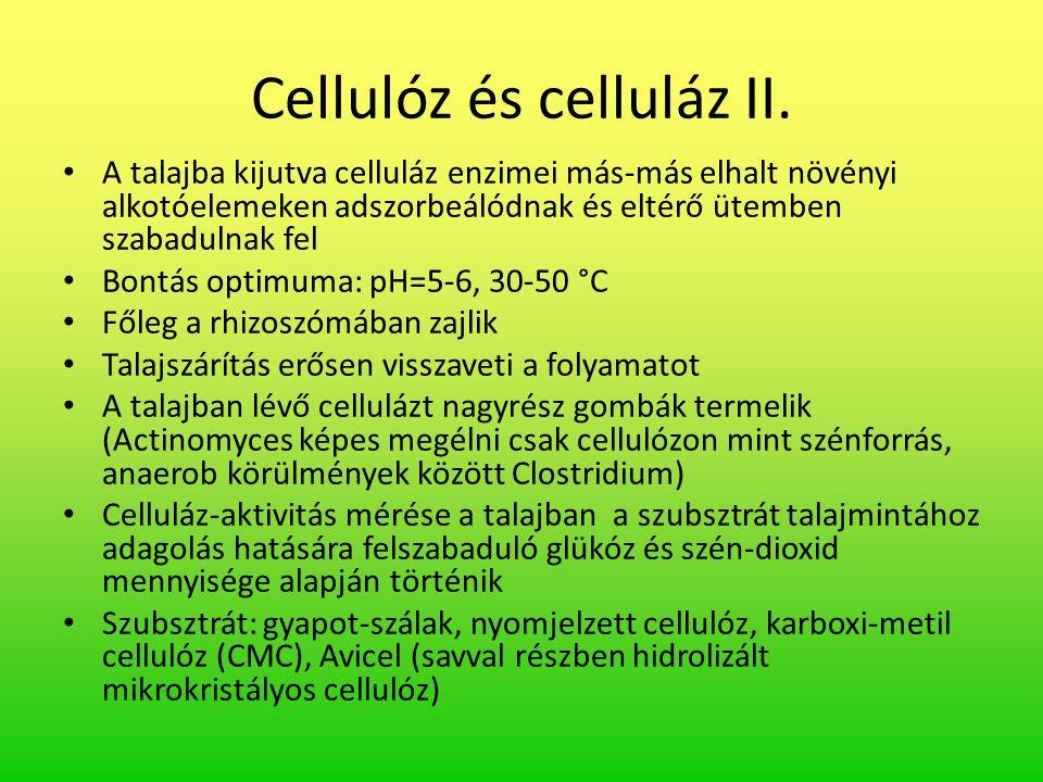 Cellulóz és celluláz II.