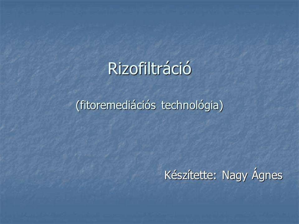 Rizofiltráció (fitoremediációs technológia)