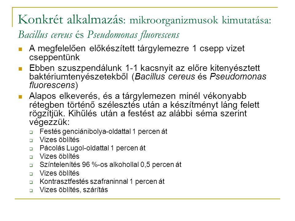 Konkrét alkalmazás: mikroorganizmusok kimutatása: Bacillus cereus és Pseudomonas fluorescens