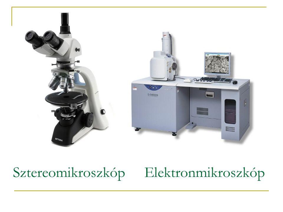 Sztereomikroszkóp Elektronmikroszkóp