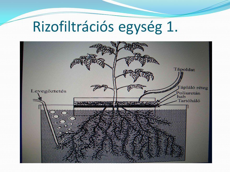 Rizofiltrációs egység 1.