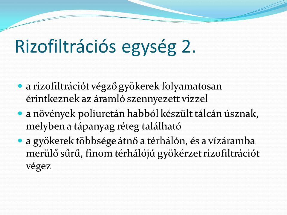 Rizofiltrációs egység 2.