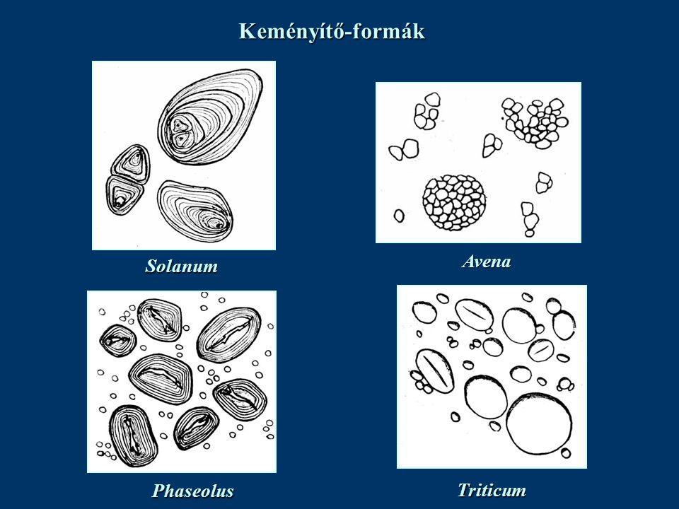 Keményítő-formák Avena Solanum Phaseolus Triticum