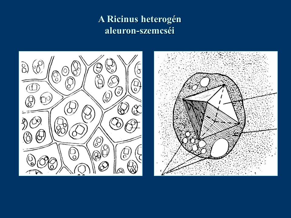 A Ricinus heterogén aleuron-szemcséi