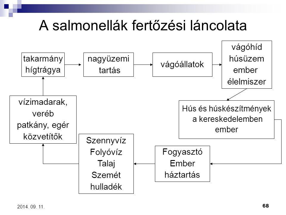 A salmonellák fertőzési láncolata