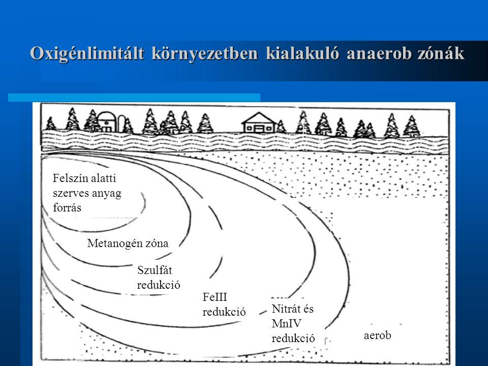 Oxigénlimitált környezetben kialakuló anaerob zónák