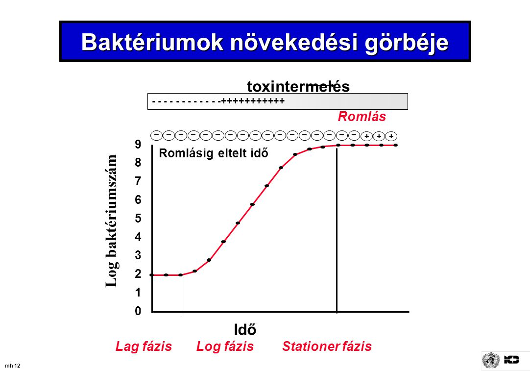 Baktériumok növekedési görbéje