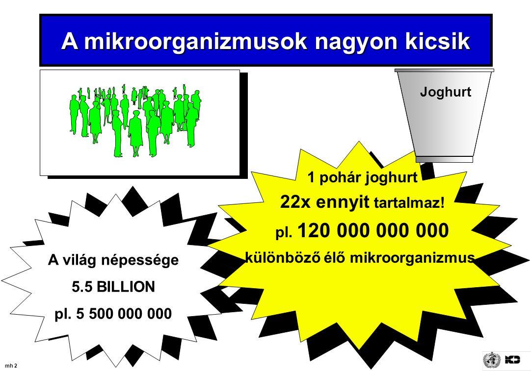 A mikroorganizmusok nagyon kicsik