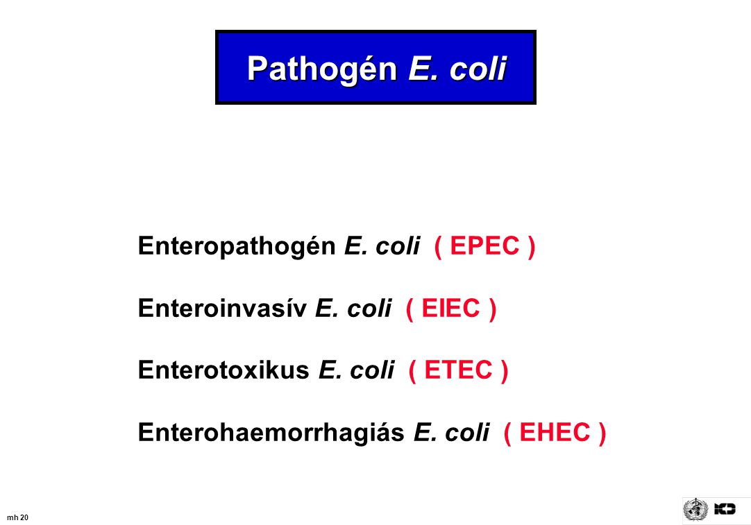 Pathogén E. coli Enteropathogén E. coli ( EPEC )