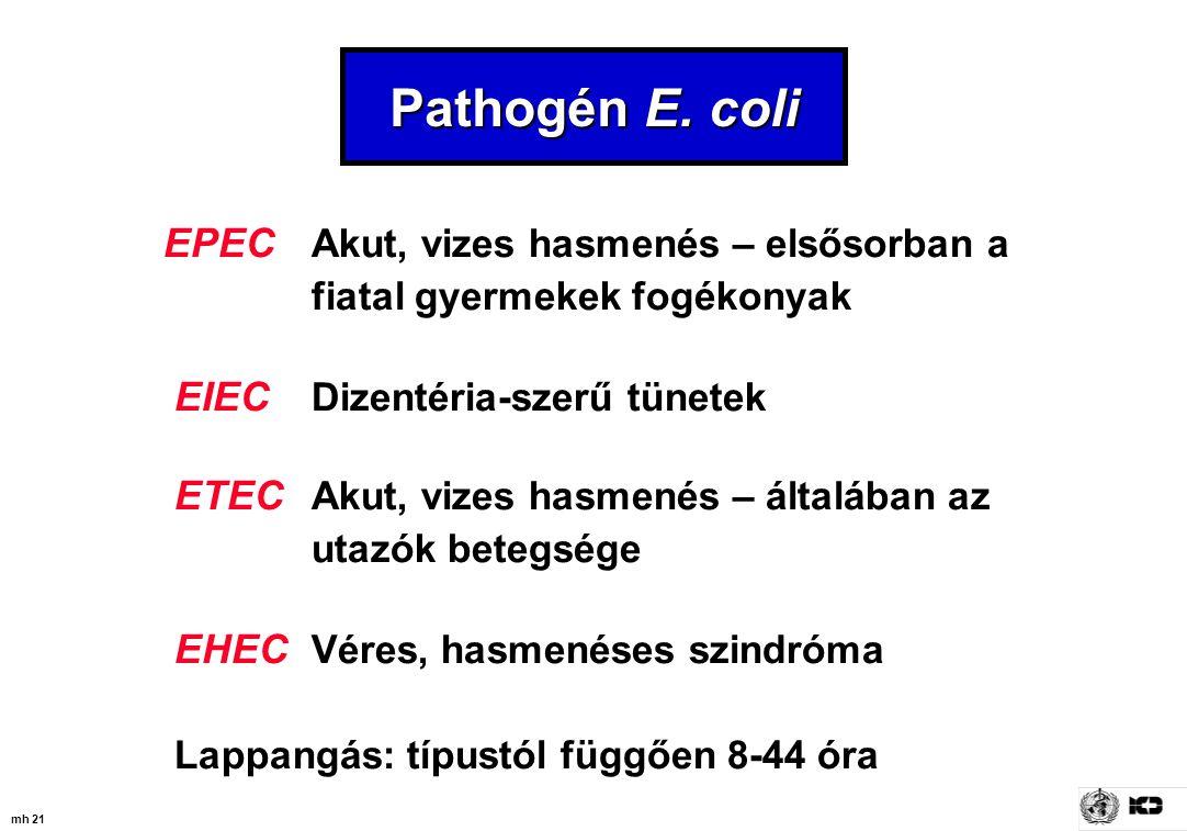 Pathogén E. coli EPEC Akut, vizes hasmenés – elsősorban a fiatal gyermekek fogékonyak. EIEC Dizentéria-szerű tünetek.