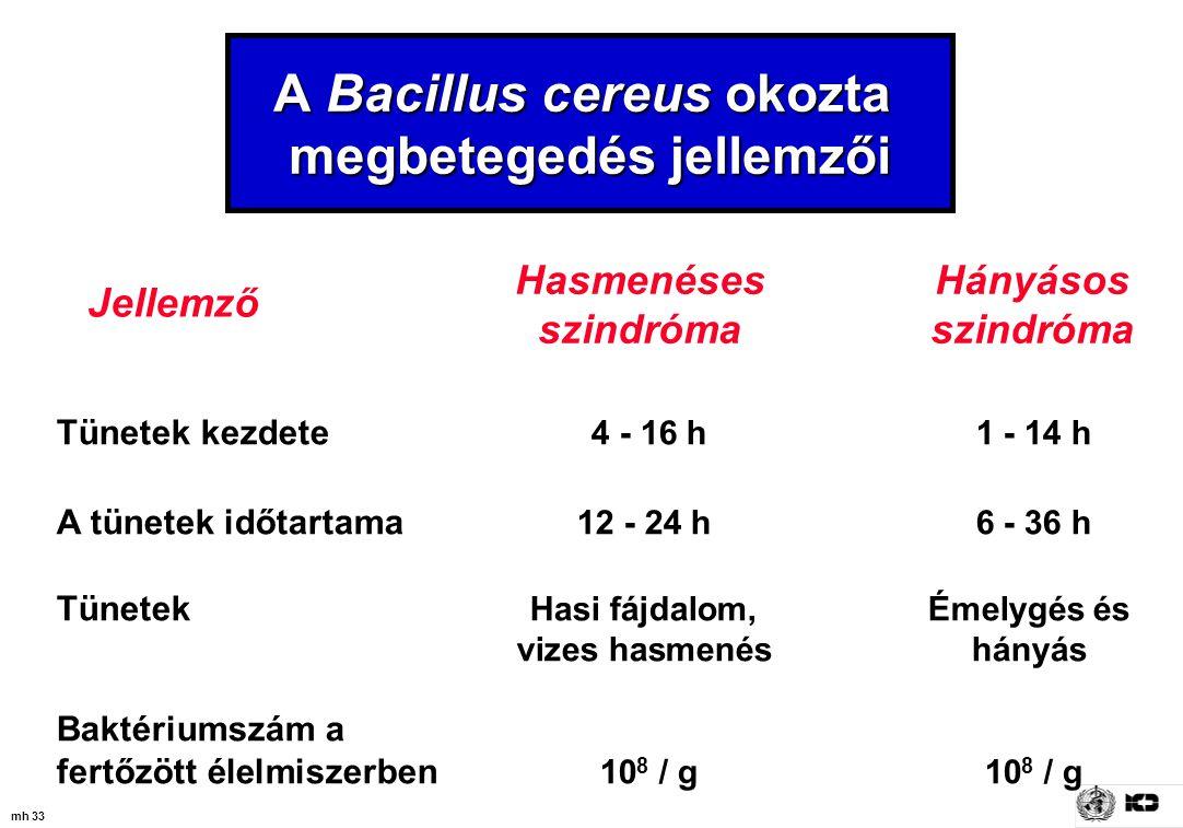 A Bacillus cereus okozta megbetegedés jellemzői