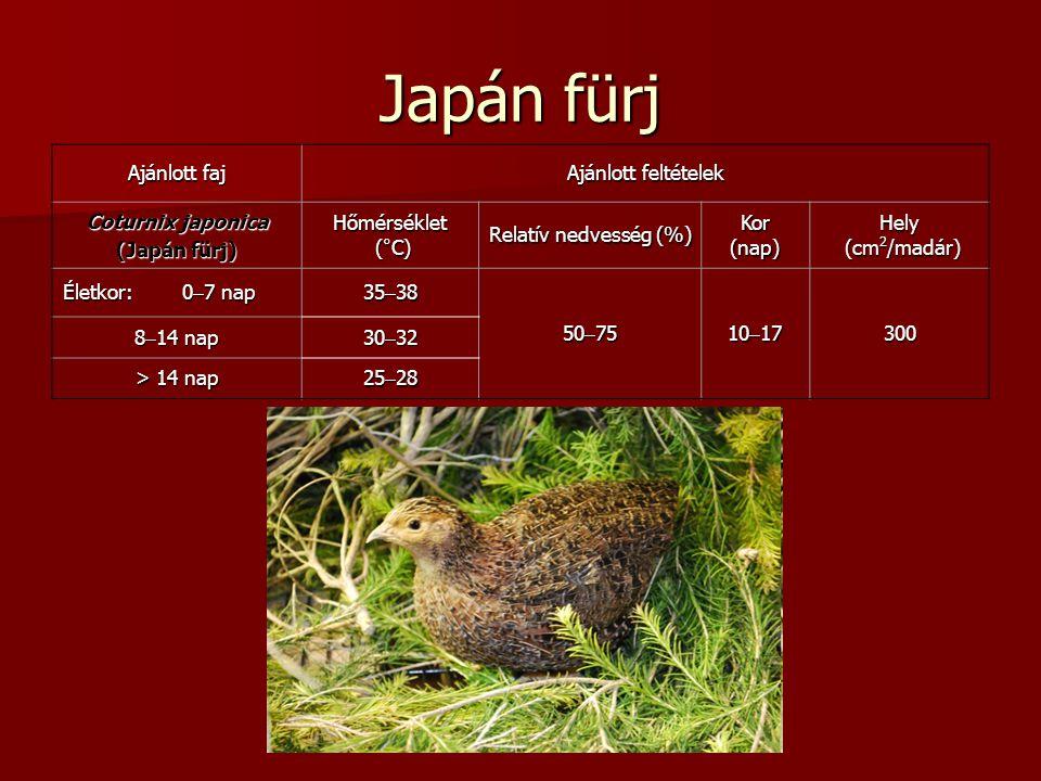 Japán fürj Ajánlott faj Ajánlott feltételek Coturnix japonica