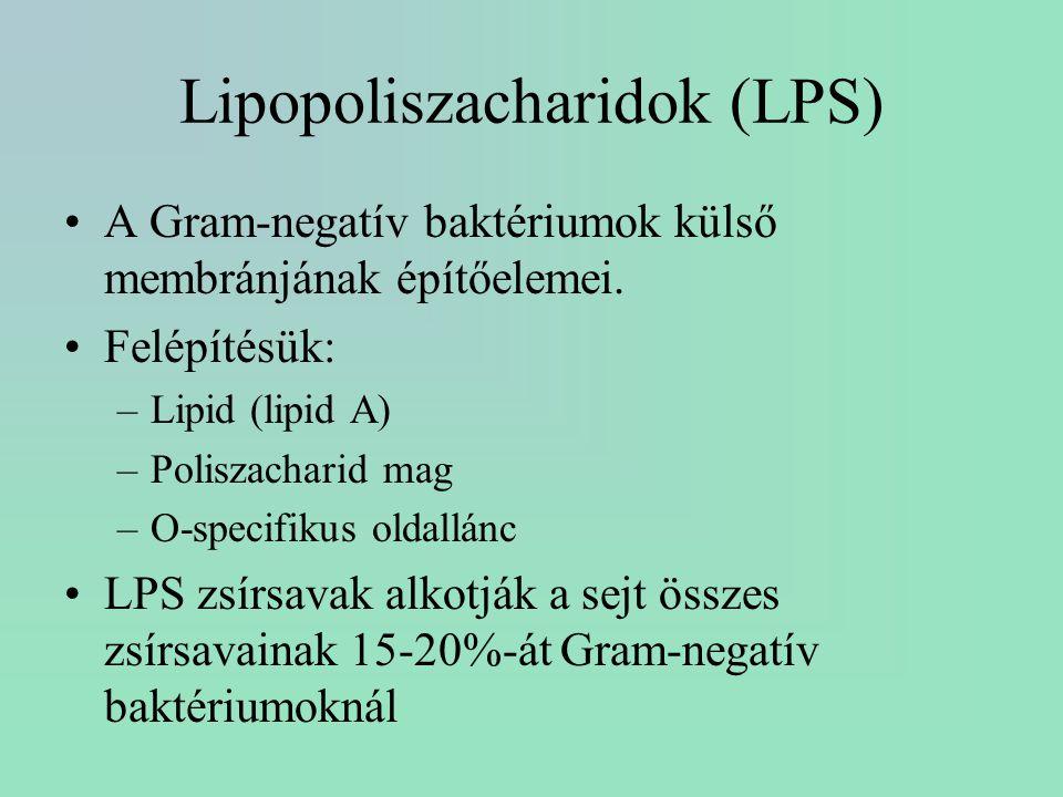 Lipopoliszacharidok (LPS)