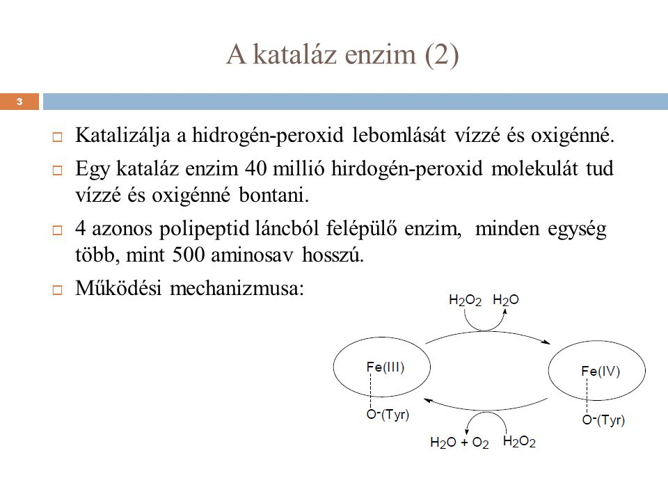 A kataláz enzim (2) Katalizálja a hidrogén-peroxid lebomlását vízzé és oxigénné.