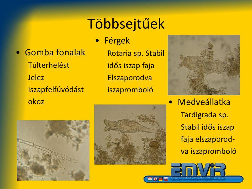 Többsejtűek Férgek Gomba fonalak Medveállatka Rotaria sp. Stabil
