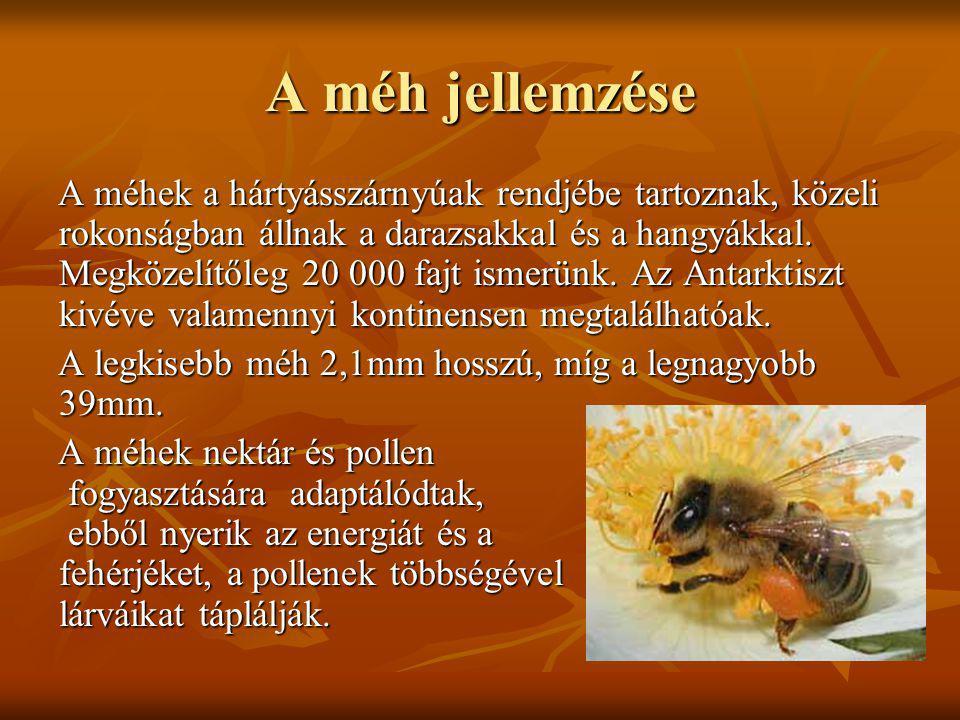 A méh jellemzése