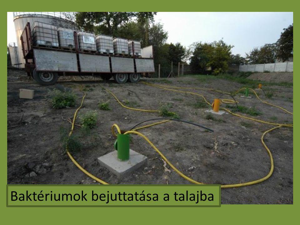 Baktériumok bejuttatása a talajba