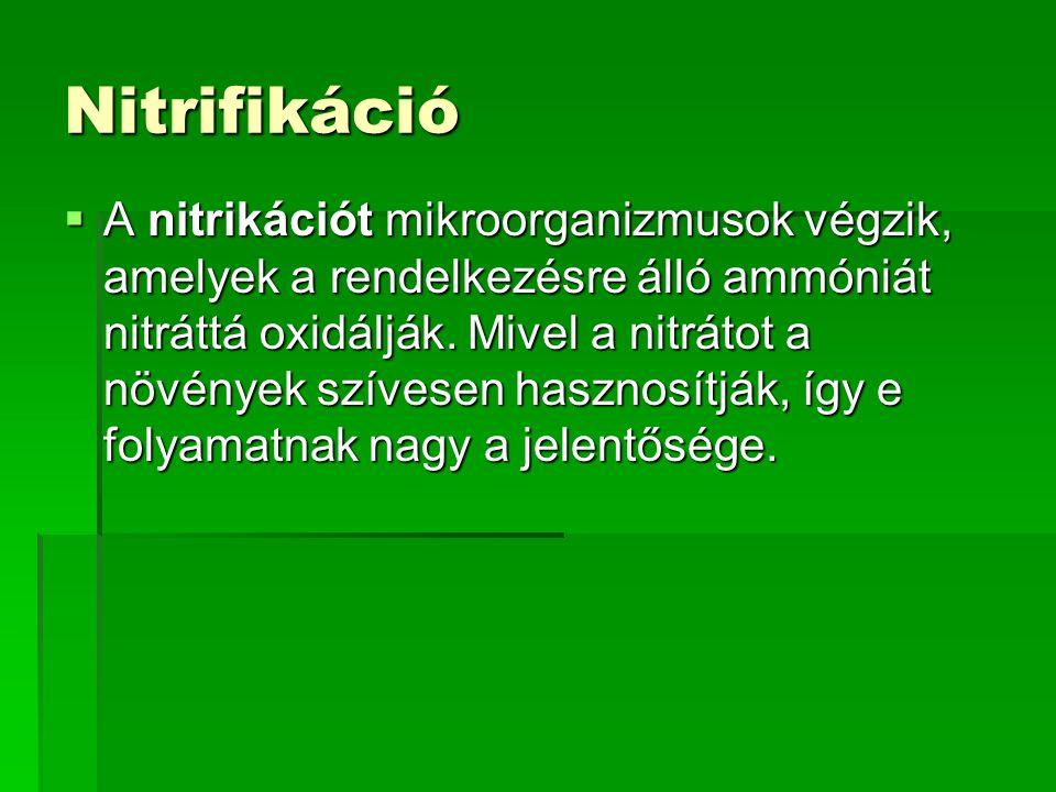 Nitrifikáció