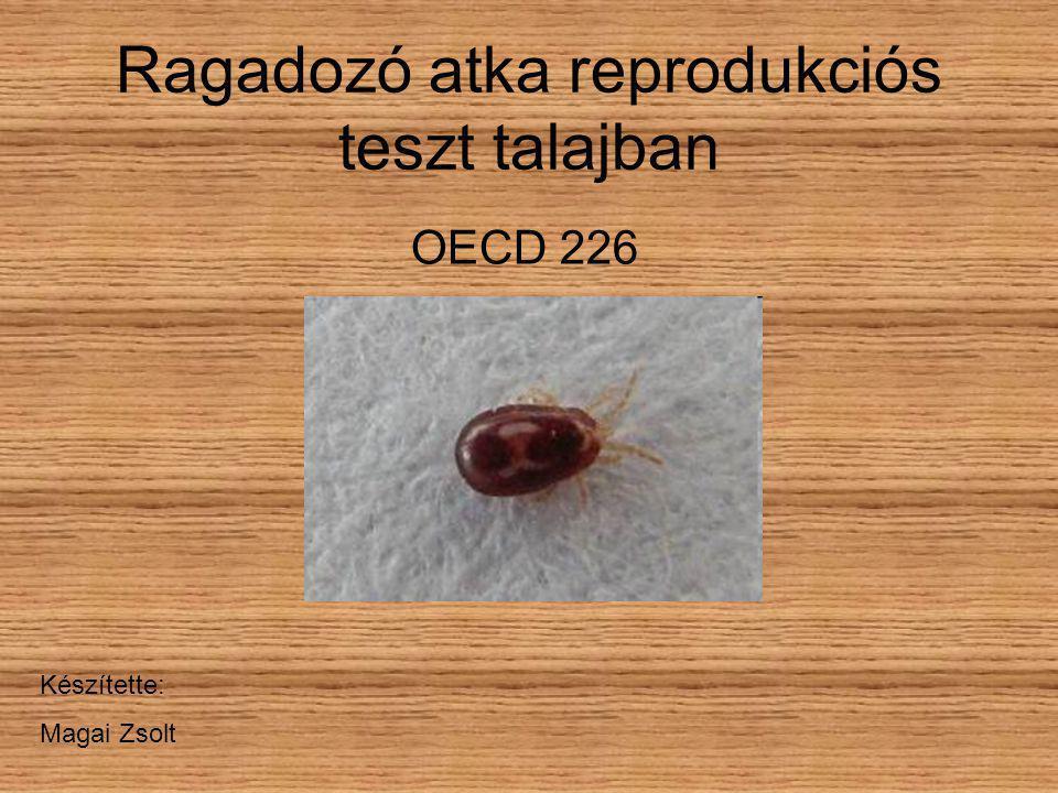 Ragadozó atka reprodukciós teszt talajban