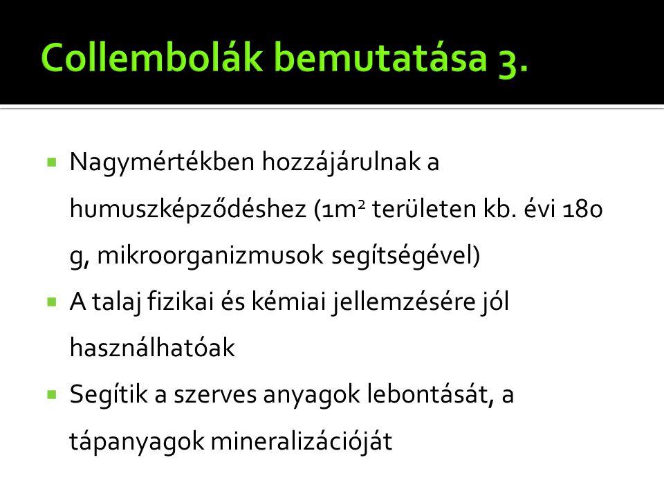 Collembolák bemutatása 3.