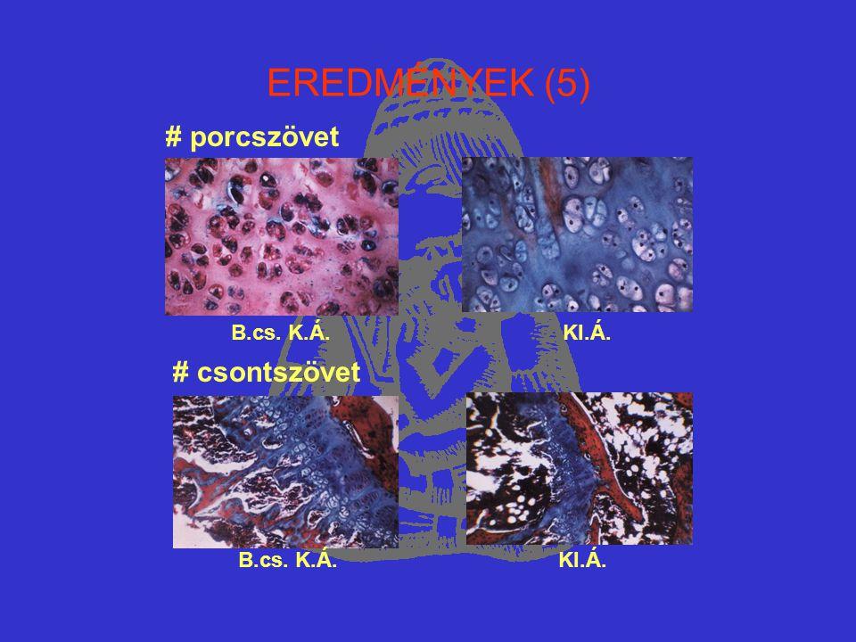 EREDMÉNYEK (5) # porcszövet # csontszövet B.cs. K.Á. KI.Á.
