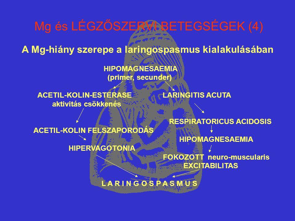 Mg és LÉGZŐSZERVI BETEGSÉGEK (4)