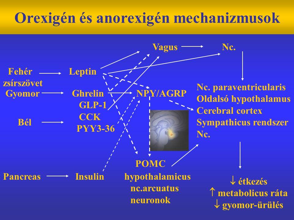 Orexigén és anorexigén mechanizmusok