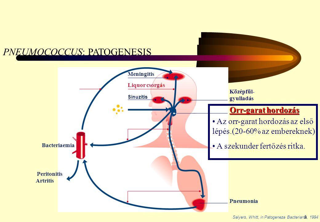 PNEUMOCOCCUS: PATOGENESIS
